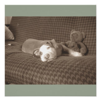 American_Pit_Bull_Terrier_and_teddy_bear_on_couch. Poster