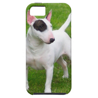American Pit Bull Terrier Dog iPhone 5 Cover