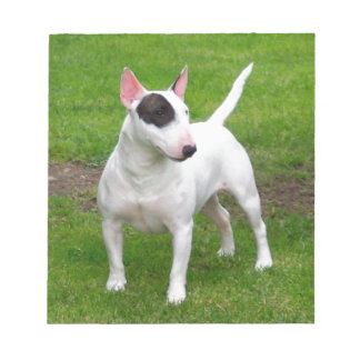 American Pit Bull Terrier Dog Notepad
