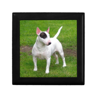 American Pit Bull Terrier Dog Small Square Gift Box
