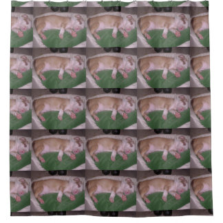 american pit_bull_terrier puppy sleeping shower curtain