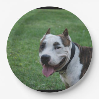 american pit bull terrier smiling paper plate