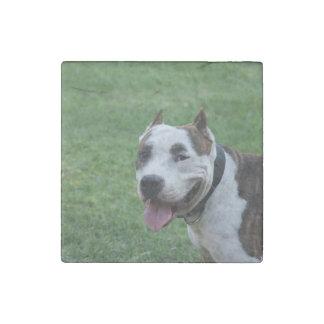 american pit bull terrier smiling stone magnet