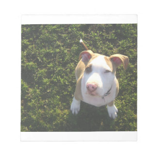 american PitBull terrier Looking Up Notepad