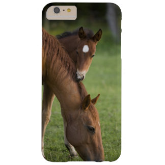 American Quarter horse mare and colt in field at Barely There iPhone 6 Plus Case