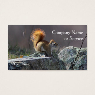 American Red Squirrel Business Card