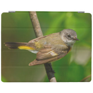 American Redstart (Setophaga Ruticilla) Female iPad Cover