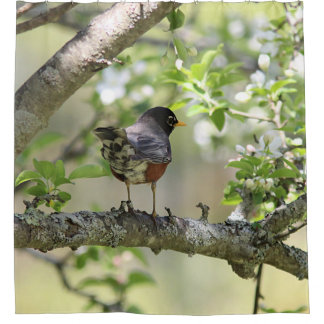 American Robin and Spring Blossoms Shower Curtain