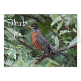 American robin card