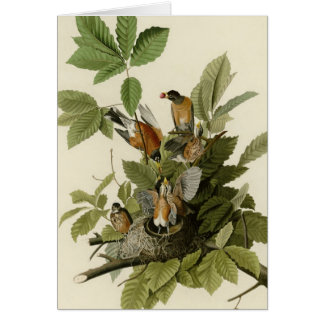 American Robin Cards