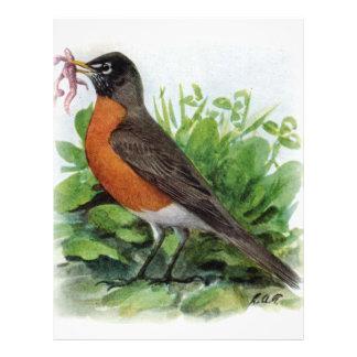 American Robin Flyer