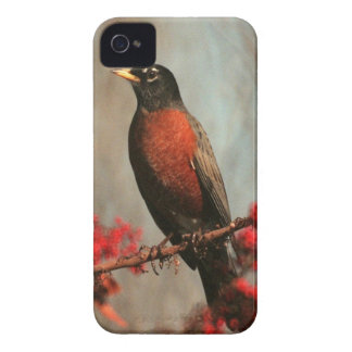 American Robin iPhone 4 Case-Mate Cases