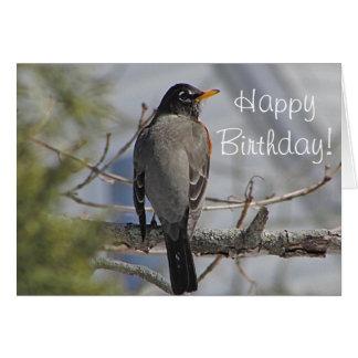 American robin photo greeting card