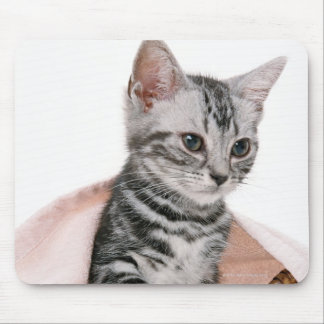 American Shorthair 2 Mouse Pad