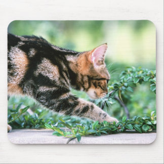American Shorthair 7 Mouse Pad