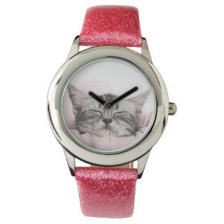 American Shorthair Cat Watch