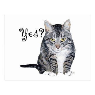 American Shorthair Cat - Yes? Postcard