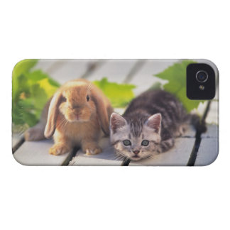 American Shorthair; is the most popular and most iPhone 4 Case-Mate Case