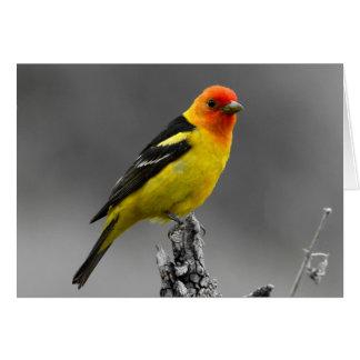 American Songbird Greetings Card