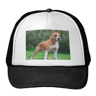 American Staffordshire Terrier Dog Cap