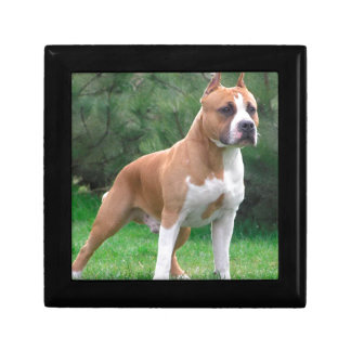 American Staffordshire Terrier Dog Small Square Gift Box