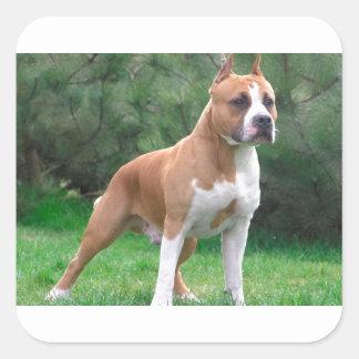 American Staffordshire Terrier Dog Square Sticker