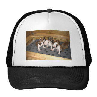 American Staffordshire Terrier Puppies Dog Cap