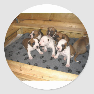 American Staffordshire Terrier Puppies Dog Classic Round Sticker