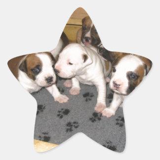 American Staffordshire Terrier Puppies Dog Star Sticker