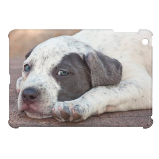 American Staffordshire Terrier puppy lying down iPad Mini Cases