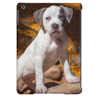 American Staffordshire Terrier puppy Portrait 2 iPad Air Cover