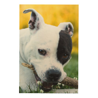 American staffordshire terrier wood wall art