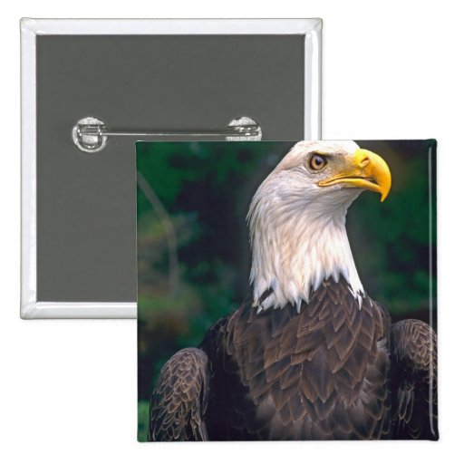 American Symbol of Freedom The Bald Eagle in the Pin
