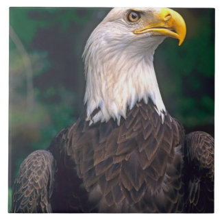 American Symbol of Freedom The Bald Eagle in the Large Square Tile