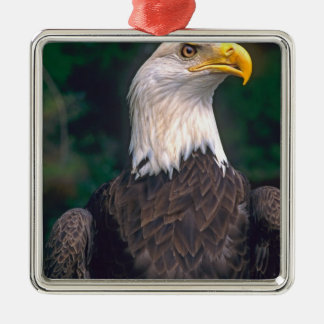 American Symbol of Freedom The Bald Eagle in the Silver-Colored Square Decoration