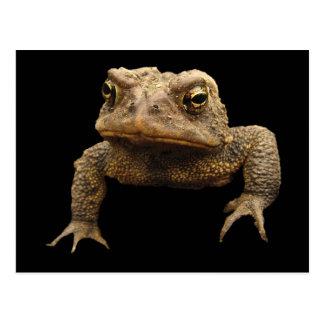 American Toad Postcard
