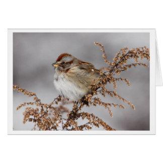 American Tree Sparrow Card