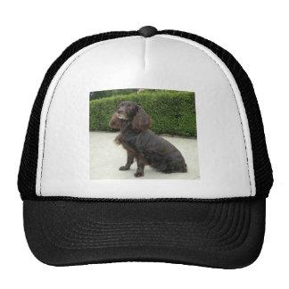 American Water Spaniel Dog Cap