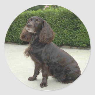 American Water Spaniel Dog Round Sticker