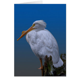 American White Pelican at the Water Card