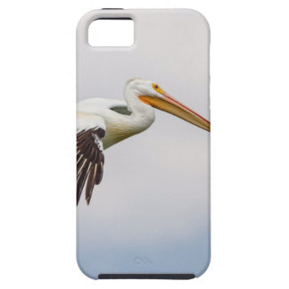 American White Pelican Cruising iPhone 5 Cover