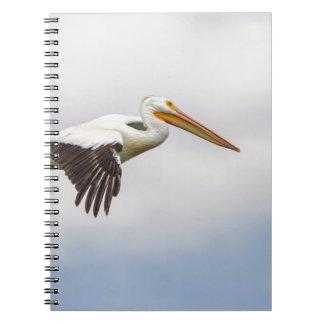 American White Pelican Cruising Notebook