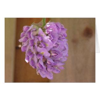 American wisteria (Wisteria frutescens) card