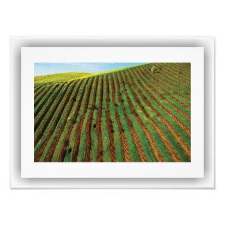 Americana - Winery, Satin Print