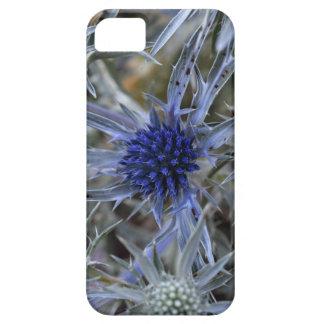 Amethyst eryngo (Eryngium amethystinum) Case For The iPhone 5