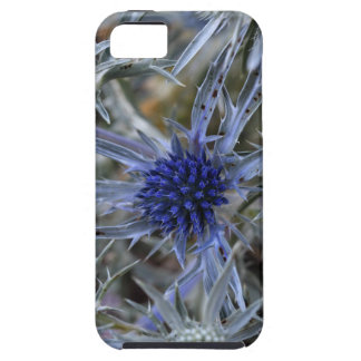 Amethyst eryngo (Eryngium amethystinum) iPhone 5 Covers