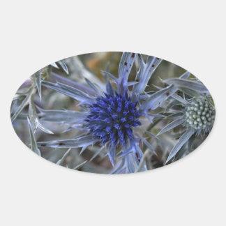 Amethyst eryngo (Eryngium amethystinum) Oval Sticker