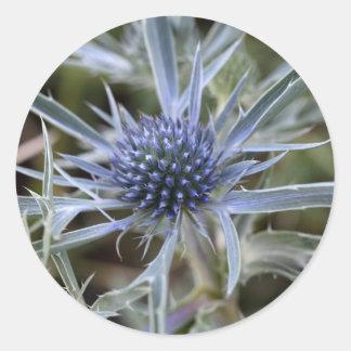 Amethyst eryngo (Eryngium amethystinum) Round Sticker