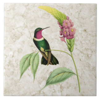 Amethyst Throated Hummingbird Ceramic Tile