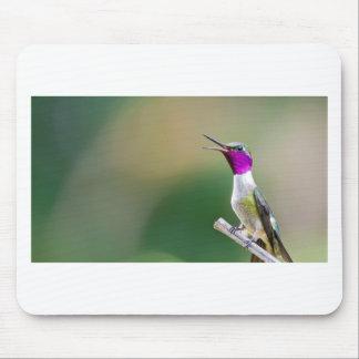 Amethyst Woodstar Hummingbird Mouse Pad